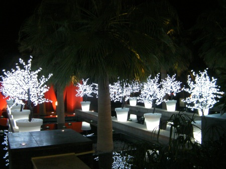 light bushes in a water feature