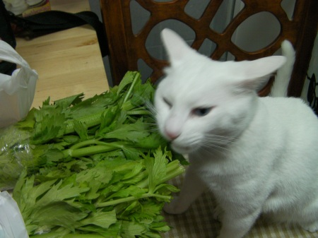 white cat eating celery leaves