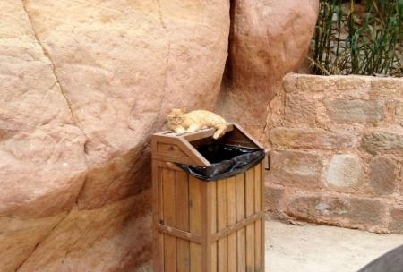 orange tabby laying on top of a garbage can