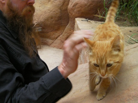 man petting orange tabby