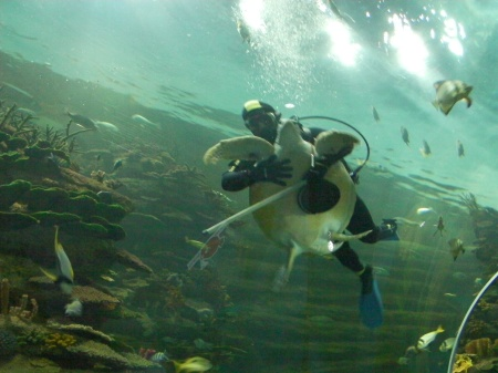 diver hugging a sea turtle