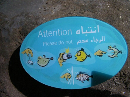 sign instructing not to use flash photography, rap on the glass, drop coins in the tanks, or offer your finger to hungry fish
