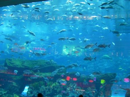 aquarium filled with fish