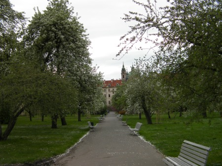 tree lined path in a park