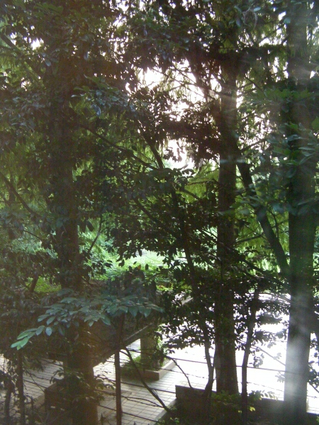 view out the window obscured by trees