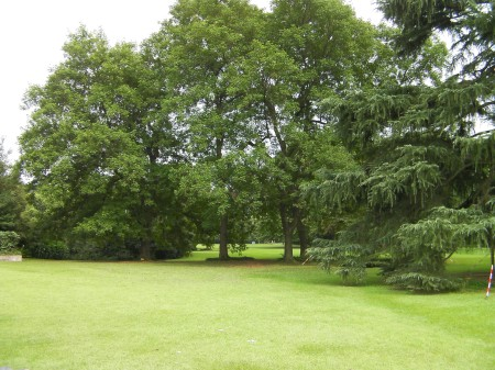 open lawn area and large deciduous trees