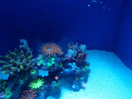 aquarium tank with anemone and sea horse