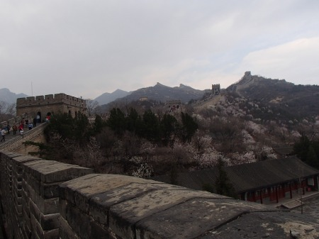The Great Wall of China, mountains, blooming trees