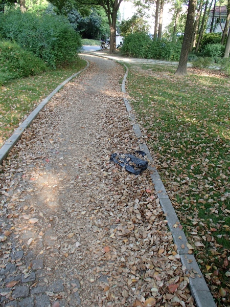 a park path covered in leaves