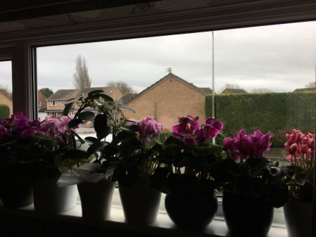 view out of a window, several flowering plants on the windowsill