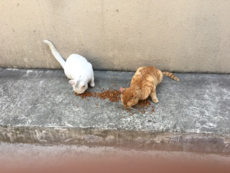 a white cat and an orange tabby